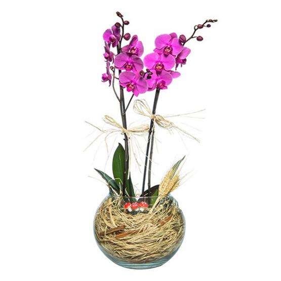eskişehir orkide siparişi
