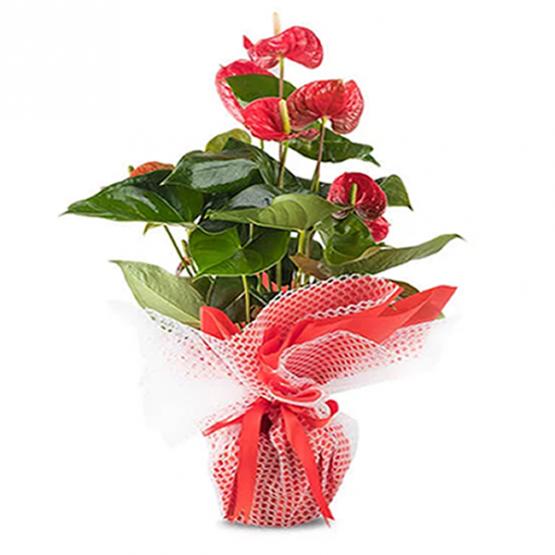 tepebaşı çiçek siparişi